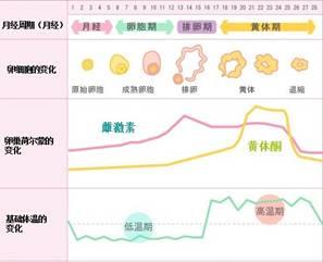 排卵期体温图_排卵期一般是什么时候-青岛新闻网
