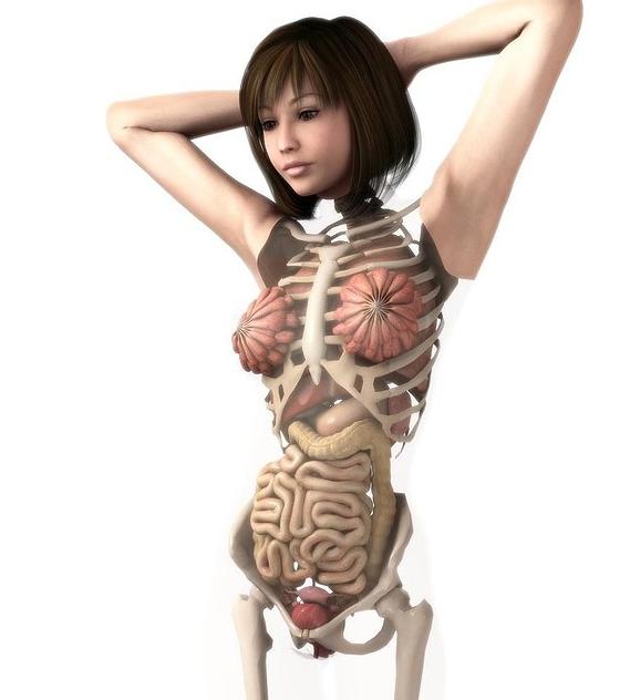 人体 日本 示意图/日本医学人体解剖示意图(组图)/青岛新闻网...